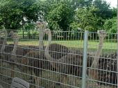 Die Straußen-Farm bei Pocking war unser erster Haltepunkt an diesem Tag. Der Inhaber erklärte uns interessantes über die exotischen Tiere.