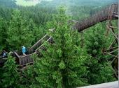 Die Wege durch die Baumkronen waren teilweise ganz schön luftig. Wer hier nicht schwindelfrei ist, bekommt Probleme.