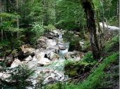 Vor der Klamm schlängelt sich der Bach durch eine märchenhafte Landschaft in deren Ruhe und Abgeschiedenheit sich angenehm Wandern lässt.