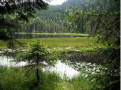 """Die """"schwimmenden Inseln"""" sind sicher nicht zum Betreten gedacht. Eine Besonderheit des Arbersees - hier kann sich Flora und Faune entfalten."""