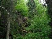 Die wilde und unberührte Schönheit des Waldes, rund um den Arbersee ist sehenswert. Hier wird der Wald wieder in seinen Urzustand zurück geführt.