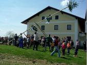 Mit ca. 12 Metern war der Baum ein gutes Stück größer und auch schwerer als letztes Jahr.