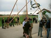 Jung und Alt halfen zusammen,  dass der Maibaum sicher in die Höhe kam.