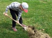 Natürlich braucht es ein Loch, damit der Baum im Boden befestigt werden kann.