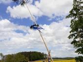 Bald ist es geschafft und der Maibaum 2020 steht in Steinbach.